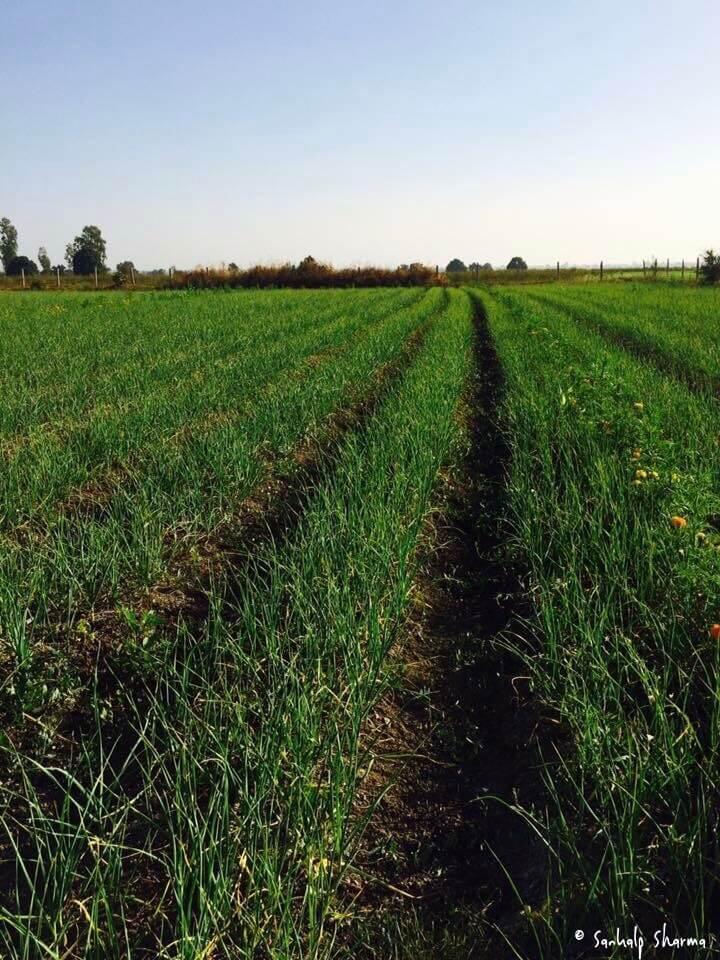 Sankalp, Farmer, Natural Farming